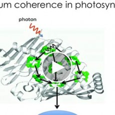 Quantum-coherence-in-photosynthesis