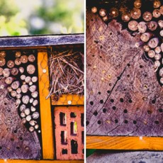 Feature-Insect-Hotel