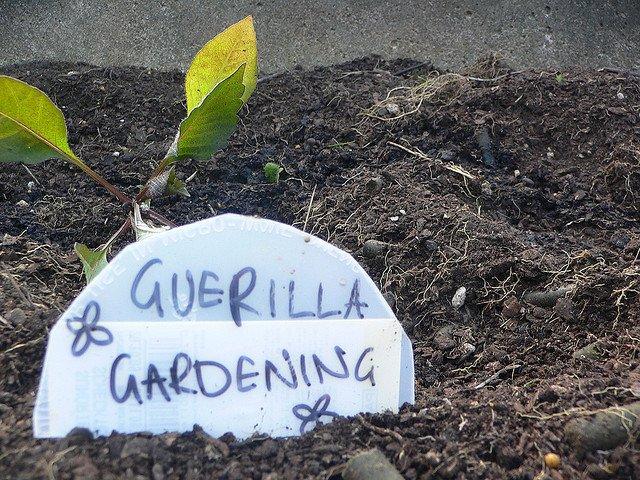 Guerilla Gardening (Courtesy of mia.judkins)