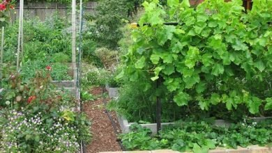 Photo of The Advantages of Permaculture over Traditional Landscaping