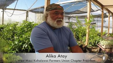 Photo of Alika Atay Teaches How to Make Fermented Plant Juice