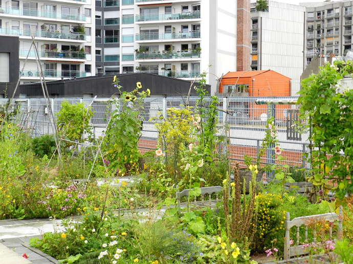 600m² of cultivated rooftop garden; flowers, vegetables, herbs, wildlife and many bees!