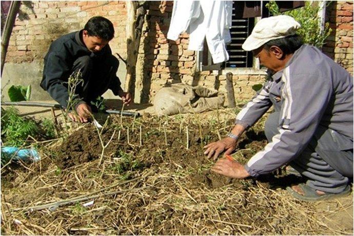 Nepali farmers onsite at Sunrise Farm.