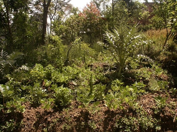 Companion Planting in the Forest Garden.