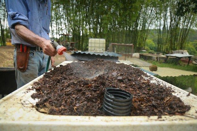 Worm farming cool dark and wholesome the permaculture for Fishing worm farm