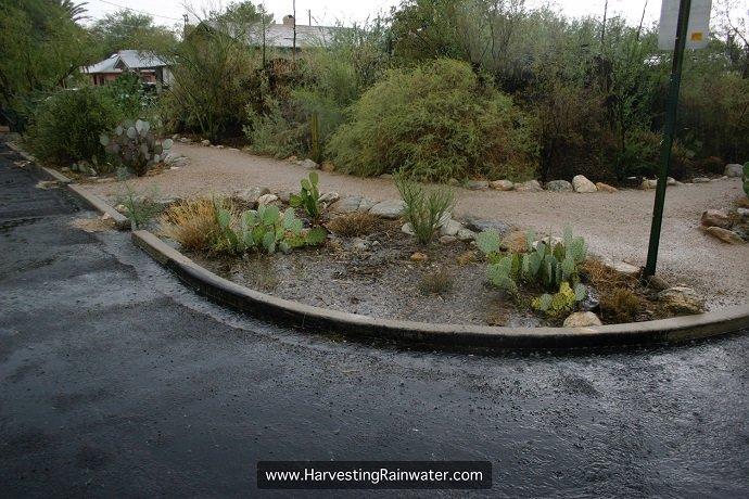 2_-prickly-pear-corner-rain-2007-IMG_5437-rwm