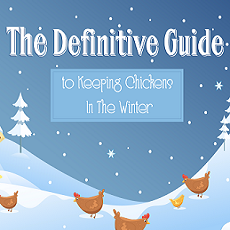 The Definitive Guide To Keeping Chickens In Winter
