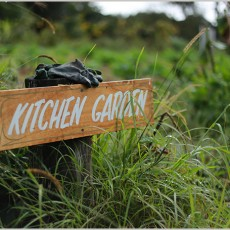 Kitchen-Garden-Zaytuna-Farm