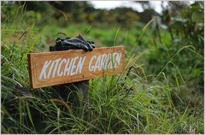 Kitchen-Garden-Zaytuna-Farm
