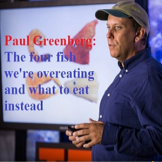 The Four Fish We are Over Eating – And What to Eat Instead