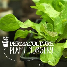 Permaculture-Plant-Nursery