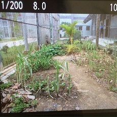 Permaculture in Prison
