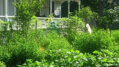 Photo of Social Polycultures: Using Permaculture for Building Resilient Relationships