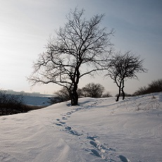 3 Nitrogen Fixing Trees for Snowy Regions