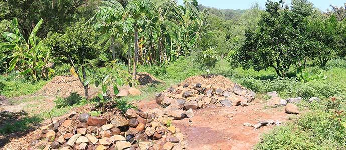 Avocanoes-at-Zaytuna-Farm