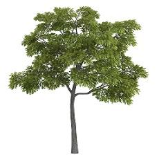 Plant Allelopathy