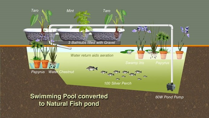 Convert-Swimming-Pool-Aquaculture