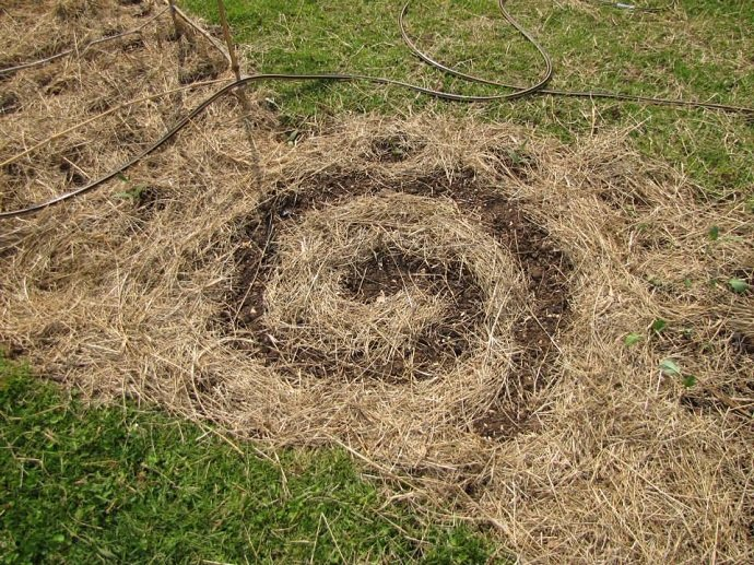 Spiral in Mulch