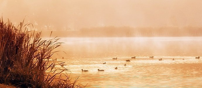 Beautiful lake with wild ducks