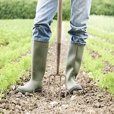 Organic Farming gets a Break