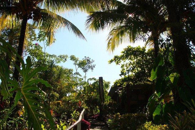 Belizean Rainforest (Courtesy of Philip Larson)