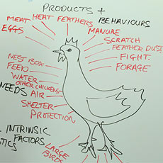 Permaculture Animals as a Discipline to the System