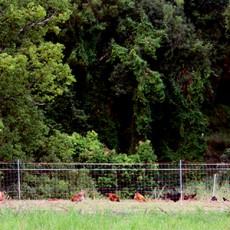 Permaculture Animals Discipline System