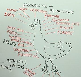 Chicken-products-behaviours