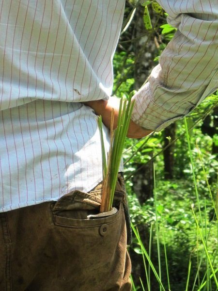 Vetiver grass strategically placed in a back pocket for future planting.