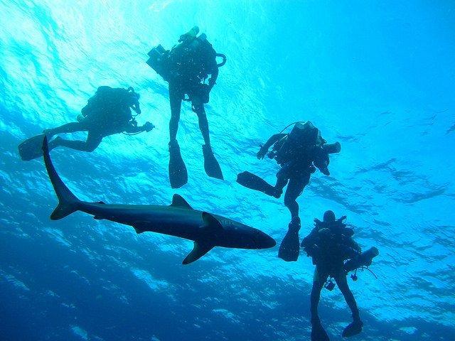 Shark (Courtesy of NOAA Ocean Explorer)