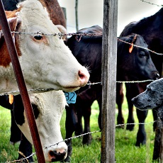 The Issue of Sustainability: How Veterinary Medicine comes into Play