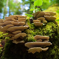 Fungi and Mould, the Great Decomposers