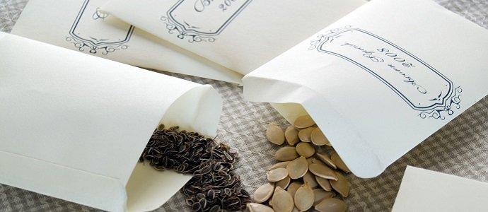 Seeds in baggies