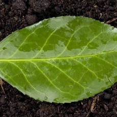 a soil with green leaf
