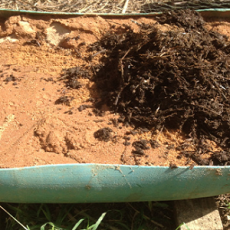 Compost Worm Experiment 01