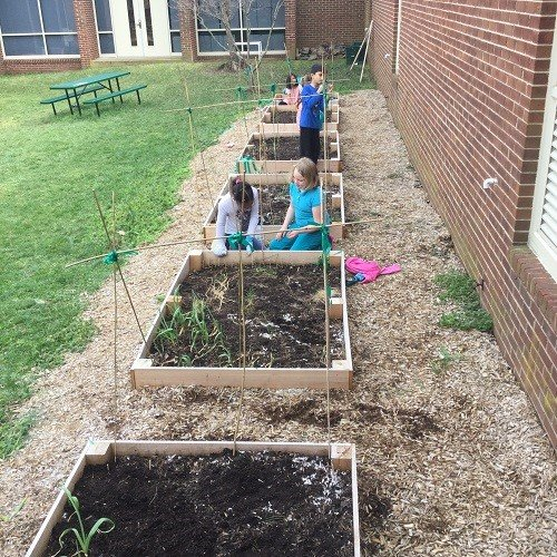 Students planting cool weather crops and building trellises