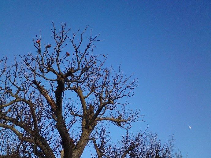 Fruit tree in January, UK. Photo by Charlotte Haworth.