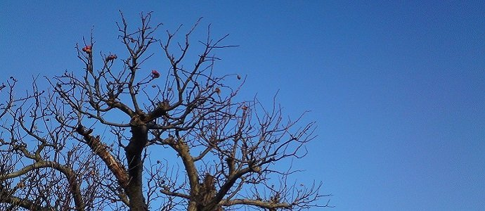 Fruit Tree in January, UK. Photo by Charlotte Haworth feat