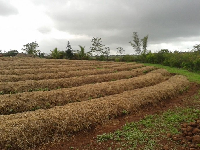 Mulched main crop beds on contour