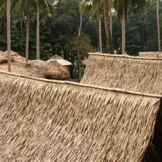 Palm Thatch Rooftops