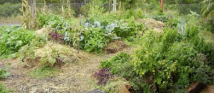 5 simple ideas for transitioning into a permaculture for Food garden design