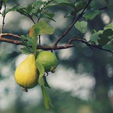 Food Forests & Crop Gardens