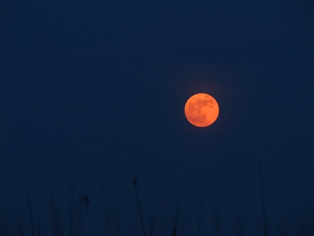 The Blood Moon, courtesy of Emma Gallagher