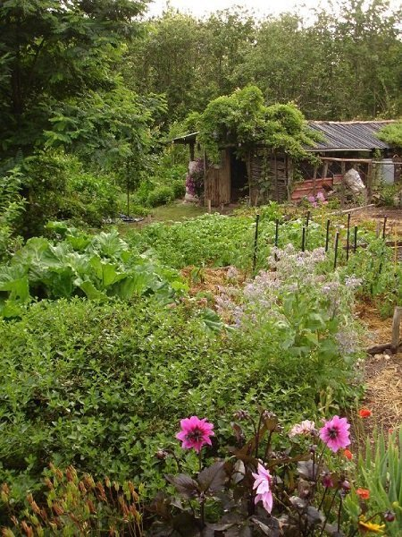 The Path to the Chicken Coop as Part of the Garden Design (Irene Kightley)
