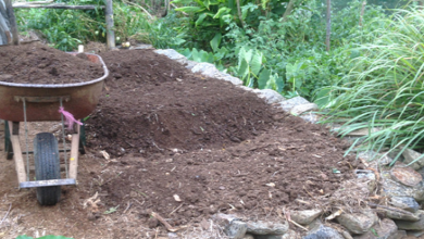 Photo of Time to Plant the Garlic