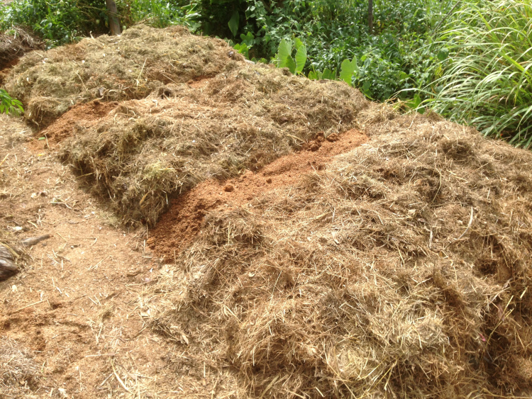 The mulched beds with sawdust on the paths.