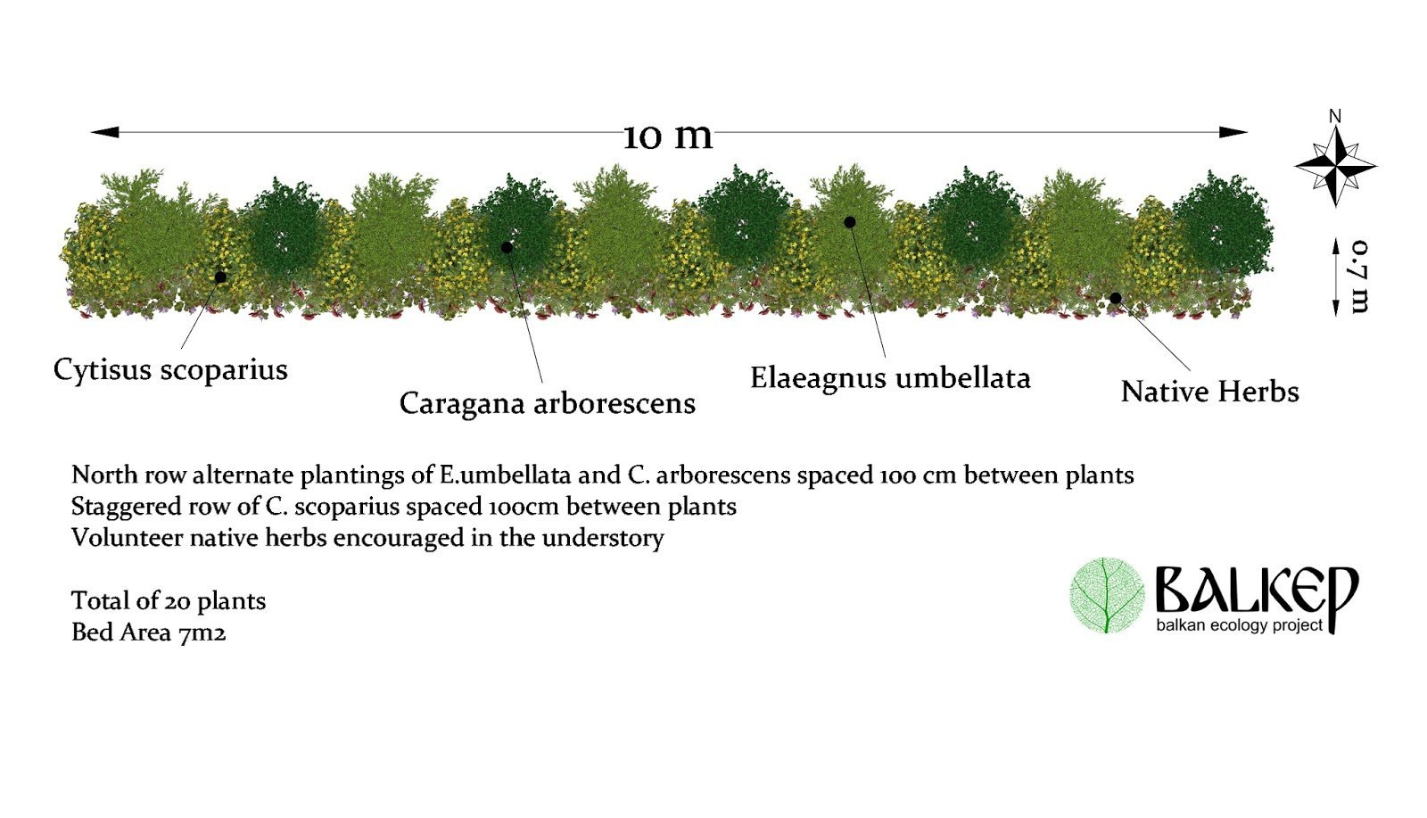Nitrogen Fixing Hedge - Biomass Belt.