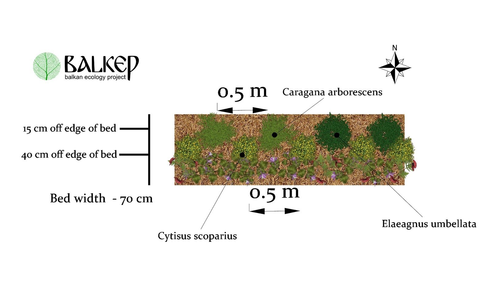 Illustration of newly planted Nitrogen Fixing Hedgerow.