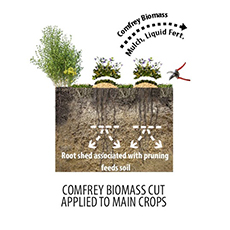 Perennial Polycultures – The Biomass Belt: Fertility Without Manure