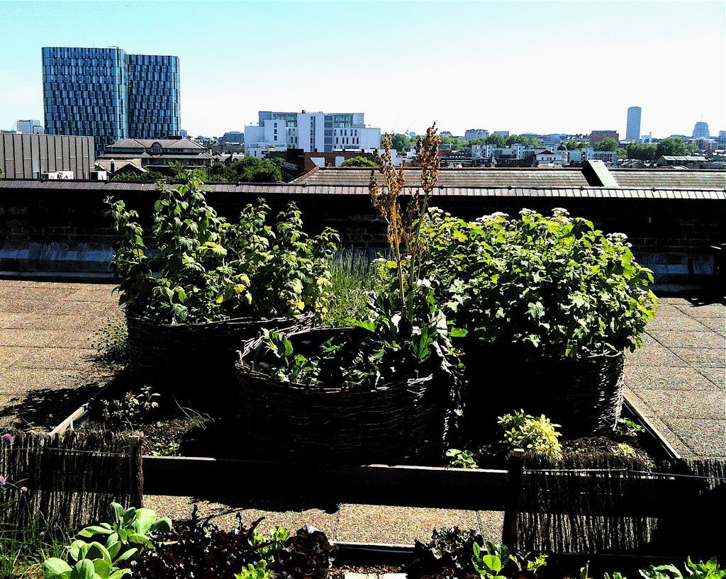 Rooftop Allotment (Courtesy of David Barrie)